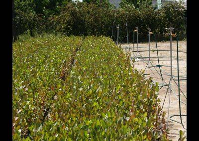 nawodnienie krzewów