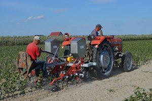 traktor na polu aronii