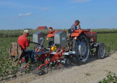 praca traktorem na polu aronii