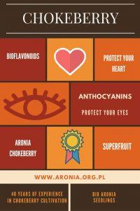 aronia-infographic