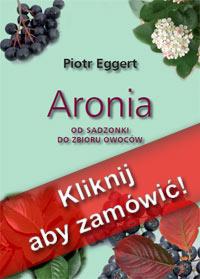 aronia od sadzonki do zbioru owoców
